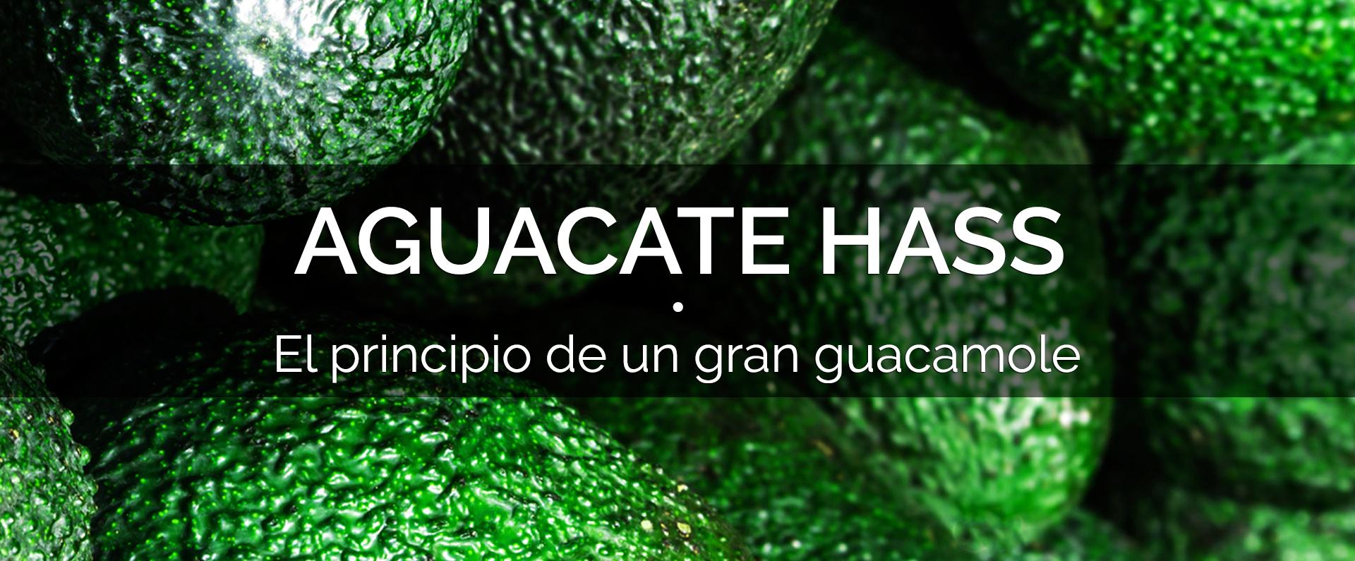 banner_aguacate_espanol