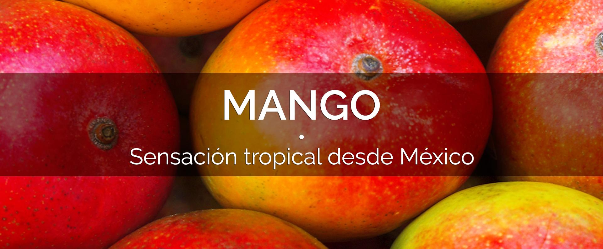 banner_mango_espanol